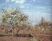 Orchard in Bloom at Louveciennes Camille Pissaro