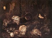 Still-Life with Insects and Amphibians ar SCHRIECK, Otto Marseus van