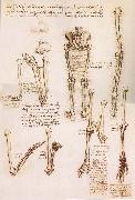 Anatomical studies of the basin of the Steibeins and the lower Gliedmaben of a woman and study of the rotation of the arms LEONARDO da Vinci