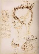Anatomical study of the brain and the scalp LEONARDO da Vinci