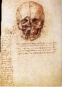 Anatomy of the Schadels LEONARDO da Vinci