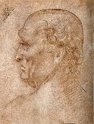 Master of the Pala Sforzesca, profile of an old man LEONARDO da Vinci