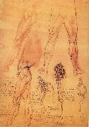 Muscles and bone of leg and Hufte LEONARDO da Vinci