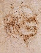 Aurelio Luini attributed, profile of an old man LEONARDO da Vinci