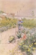 In the Kitchen Garden Carl Larsson