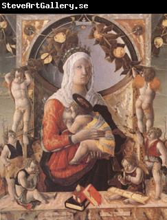 Marco Zoppo The Virgin and Child Surrounded by Eight Angels (mk05)